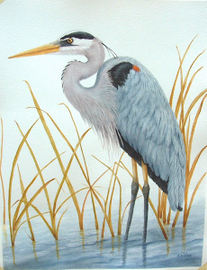 Great Blue - Watercolor